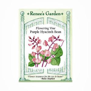 Hyacinth Bean Vine