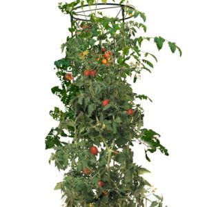 Tomato Barrel w/ 4' Tower
