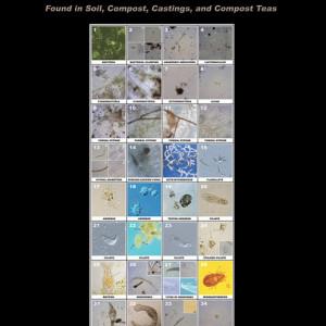 Microbe Manual