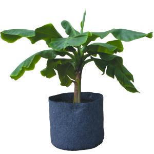 """2 Gal Root Pot 8.5""""x8.5"""""""