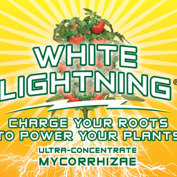 White Lightning  4 oz